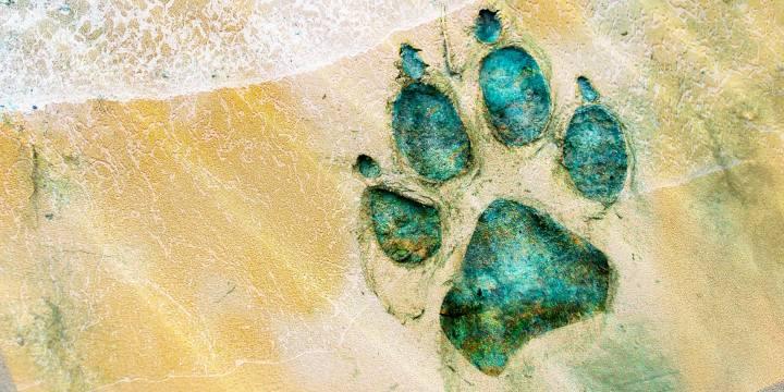 Los perros de agua, un cuento de Sandra Rangel para Etéreo Mx